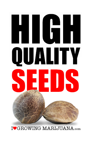 High quality marijuana seeds in Australia
