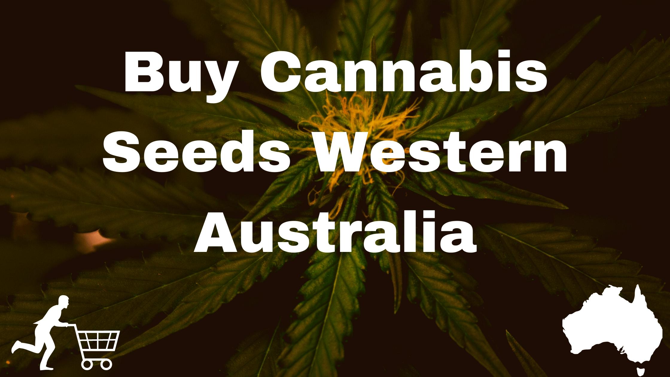 Buy Cannabis Seeds Western Australia Banner