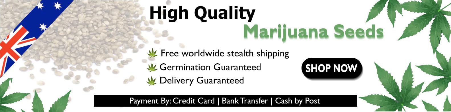 High quality marijuana seeds in Australia