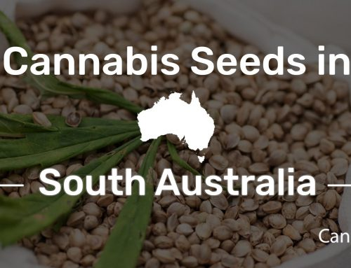 Where to Buy Cannabis Seeds in South Australia