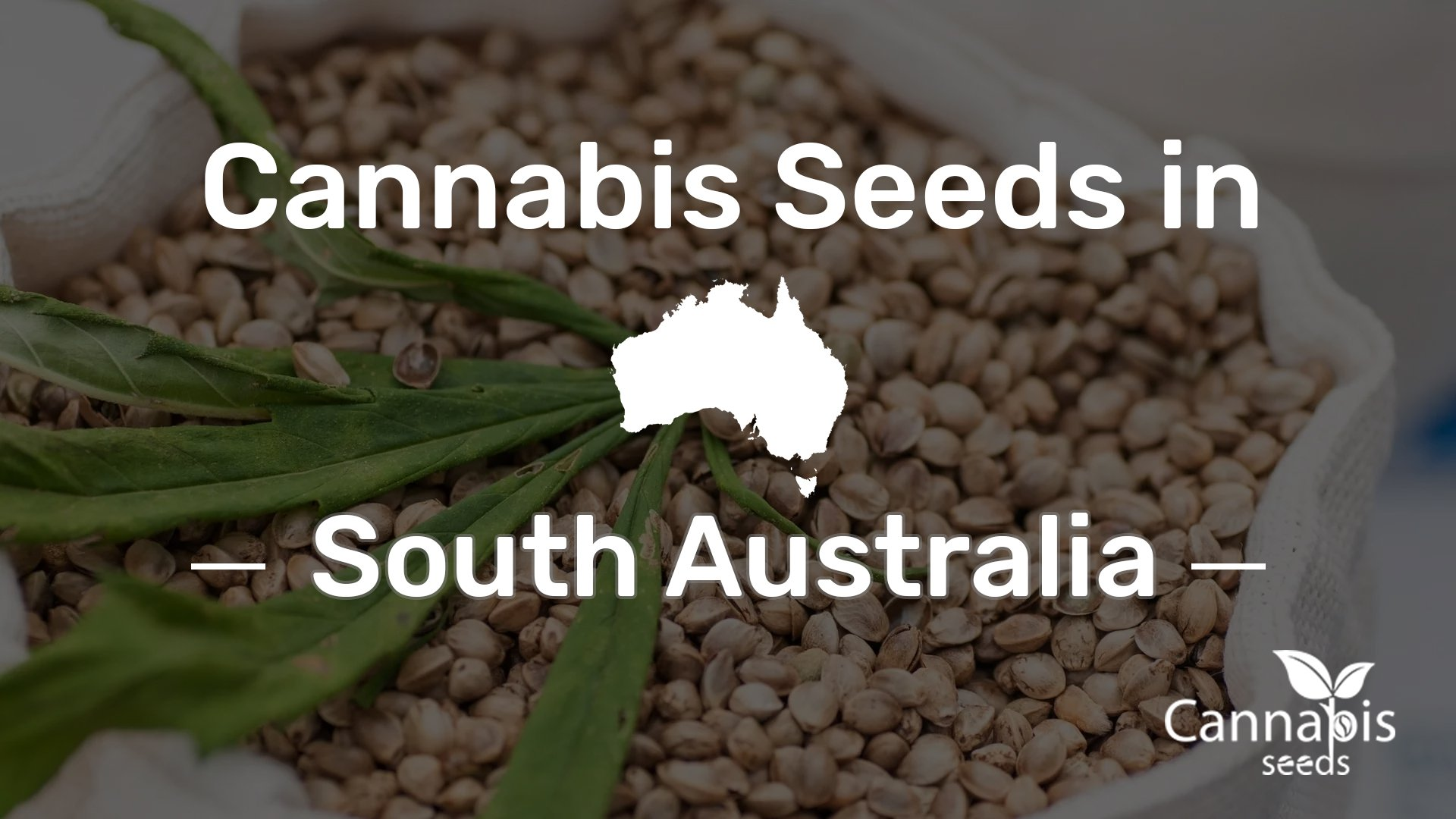 Buy Cannabis Seeds in South Australia