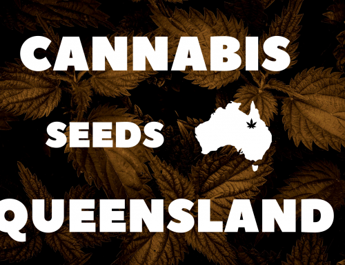 Where to Buy Cannabis Seeds in Queensland