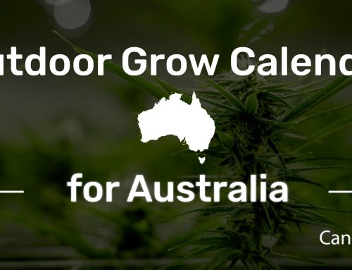 Outdoor Grow Calendar for Australia