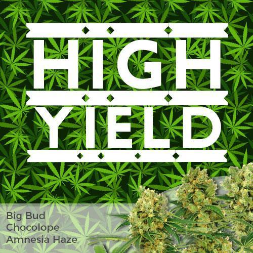 high-yield-marijuana-seeds